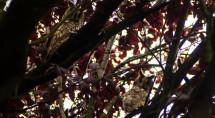 Meerdere uilen op 1 foto. Foto's van Erik Eenkhoorn