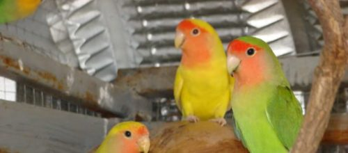 15 vogels weggevlogen....Tekst : Joke Veldman